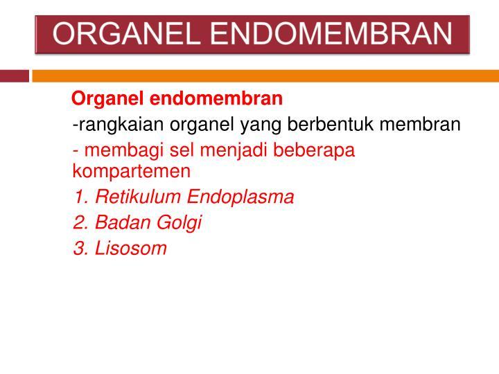 ORGANEL ENDOMEMBRAN