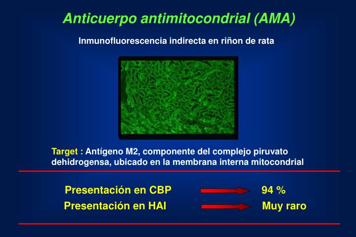 Anticuerpo antimitocondrial (AMA)