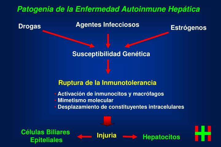 Patogenia de la Enfermedad Autoinmune Hepática