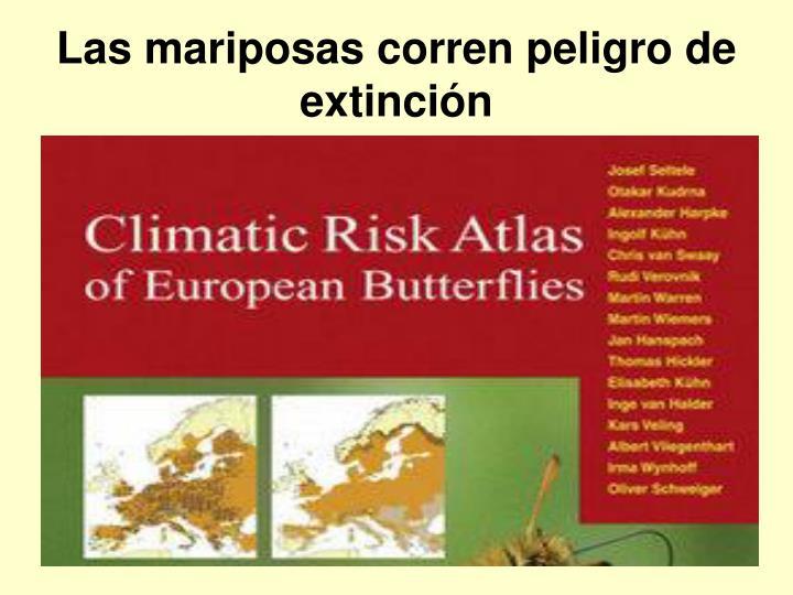 Las mariposas corren peligro de extinción