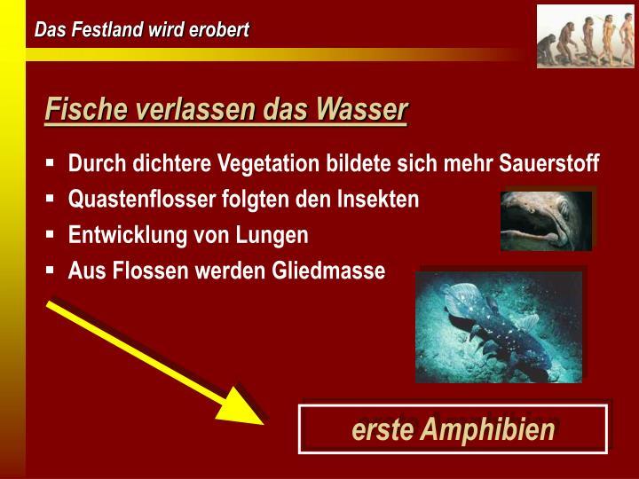 Fische verlassen das Wasser