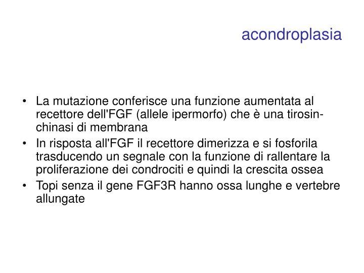 acondroplasia