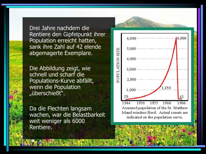 Drei Jahre nachdem die Rentiere den Gipfelpunkt ihrer Population erreicht hatten, sank ihre Zahl auf 42 elende abgemagerte Exemplare.