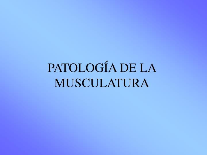 PATOLOGÍA DE LA MUSCULATURA