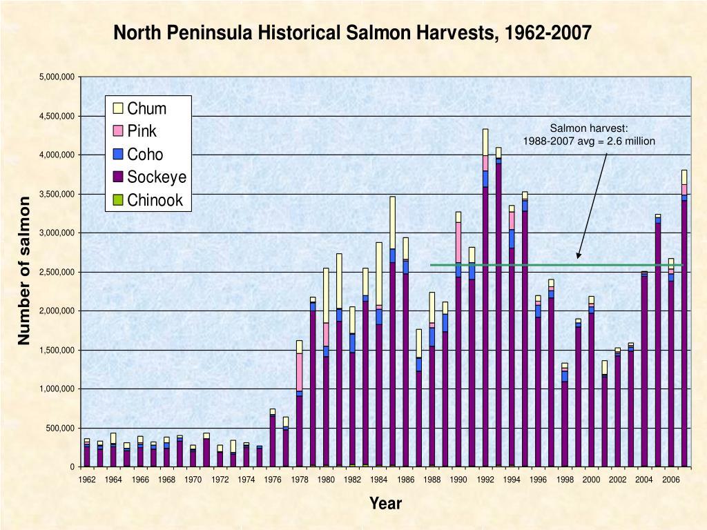Salmon harvest: