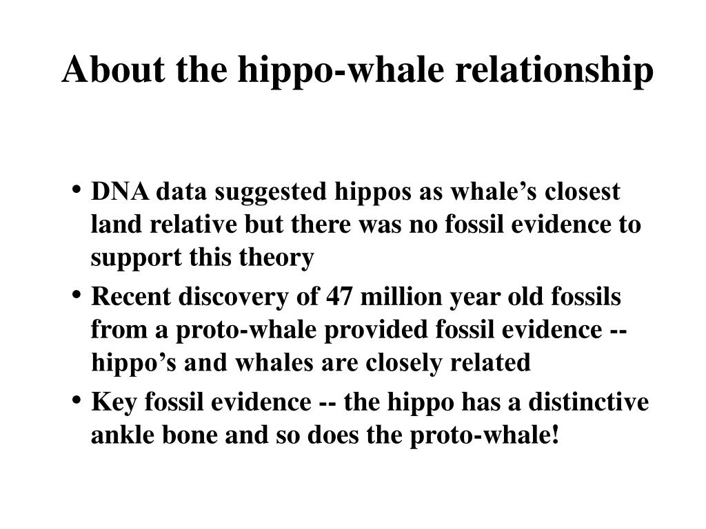 About the hippo-whale relationship
