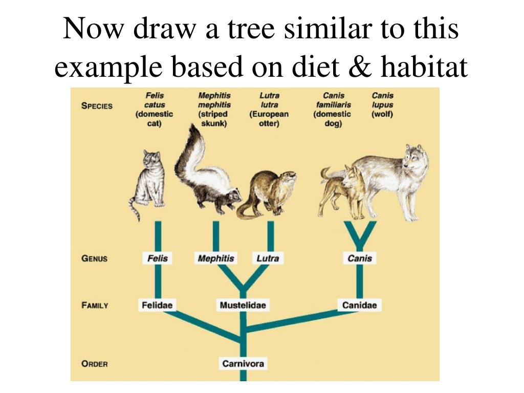 Now draw a tree similar to this example based on diet & habitat