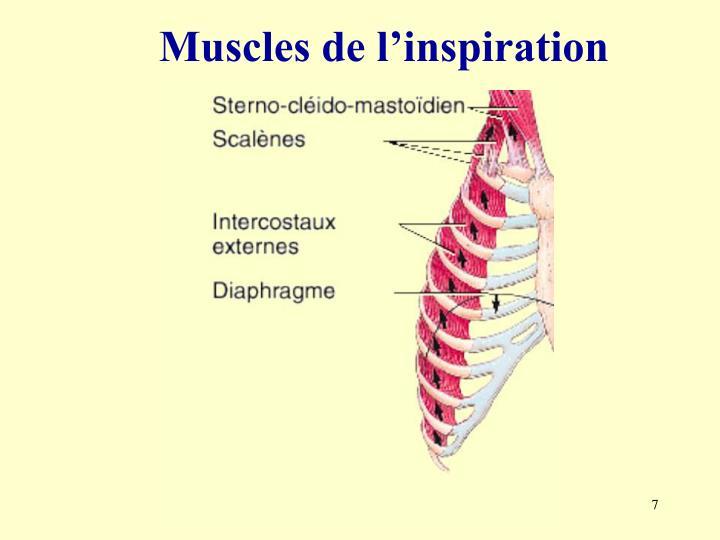Muscles de l'inspiration