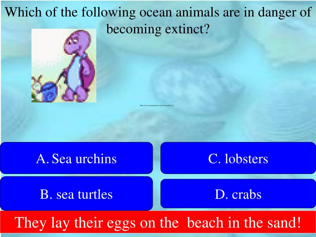 Which of the following ocean animals are in danger of becoming extinct?
