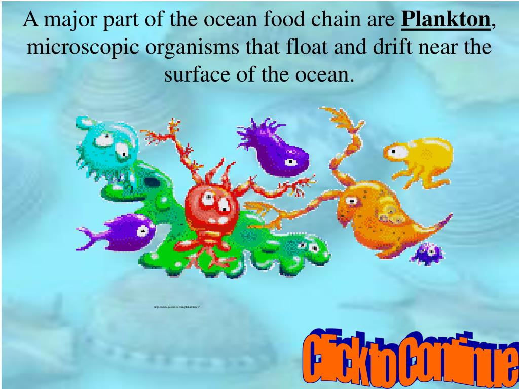 A major part of the ocean food chain are