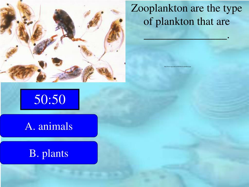 Zooplankton are the type of plankton that are _______________.