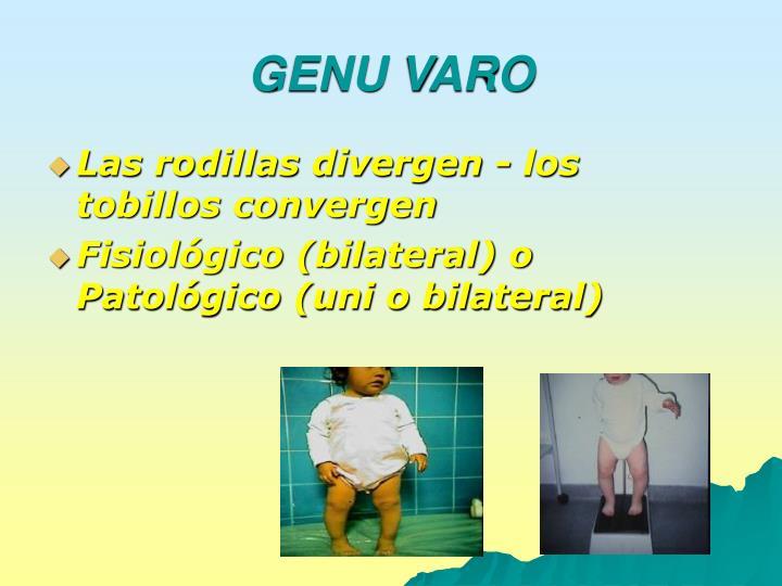 GENU VARO