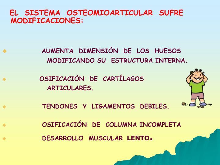 EL  SISTEMA  OSTEOMIOARTICULAR  SUFRE  MODIFICACIONES: