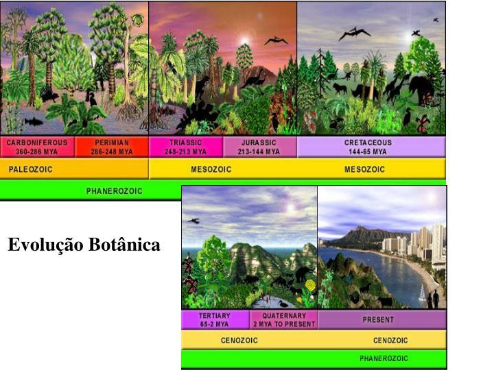Evolução Botânica