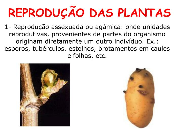 REPRODUÇÃO DAS PLANTAS