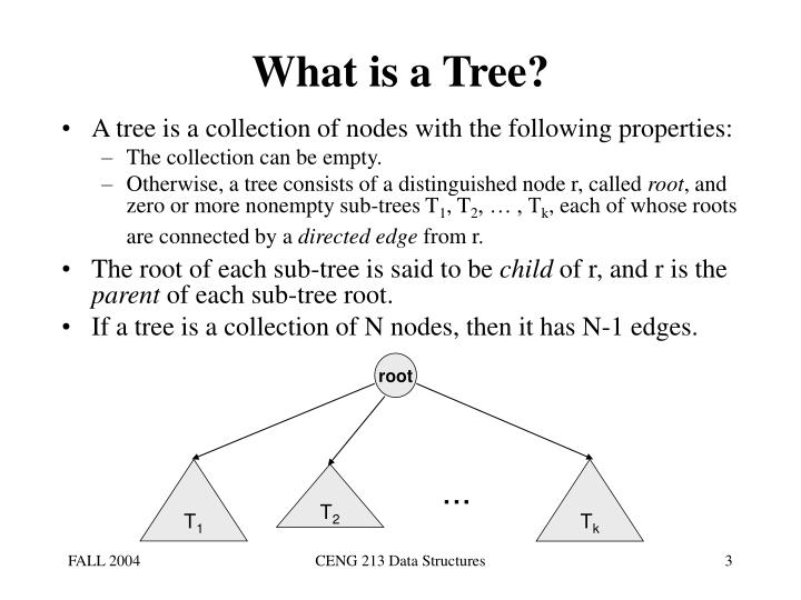 What is a tree l.jpg