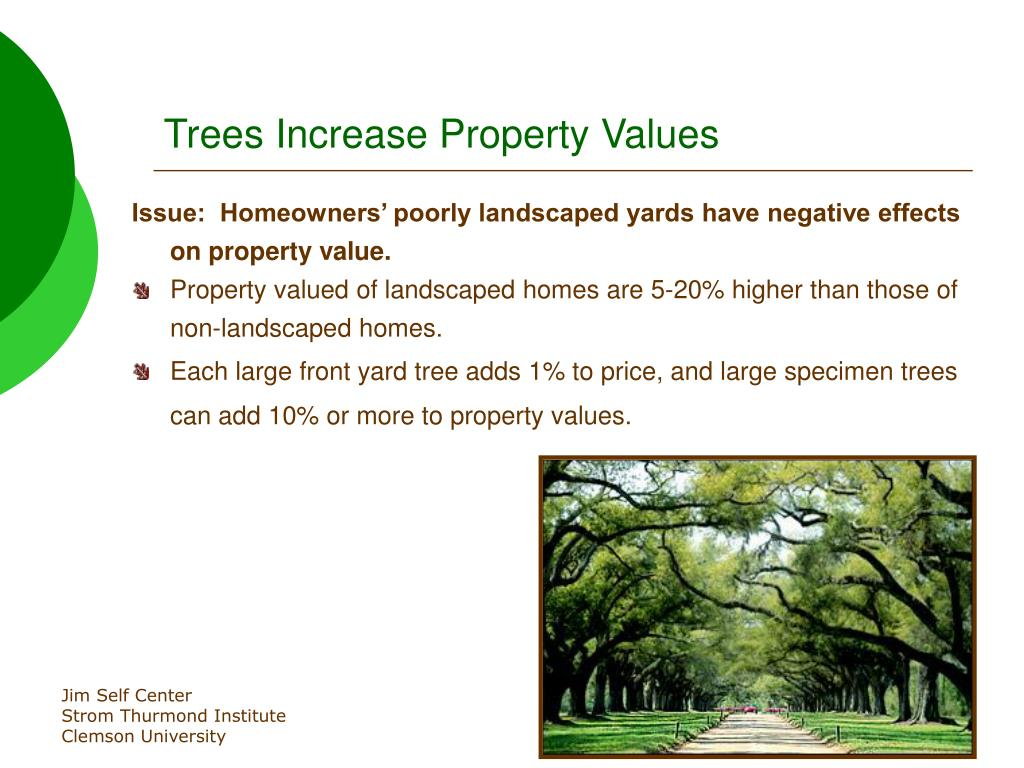 Trees Increase Property Values