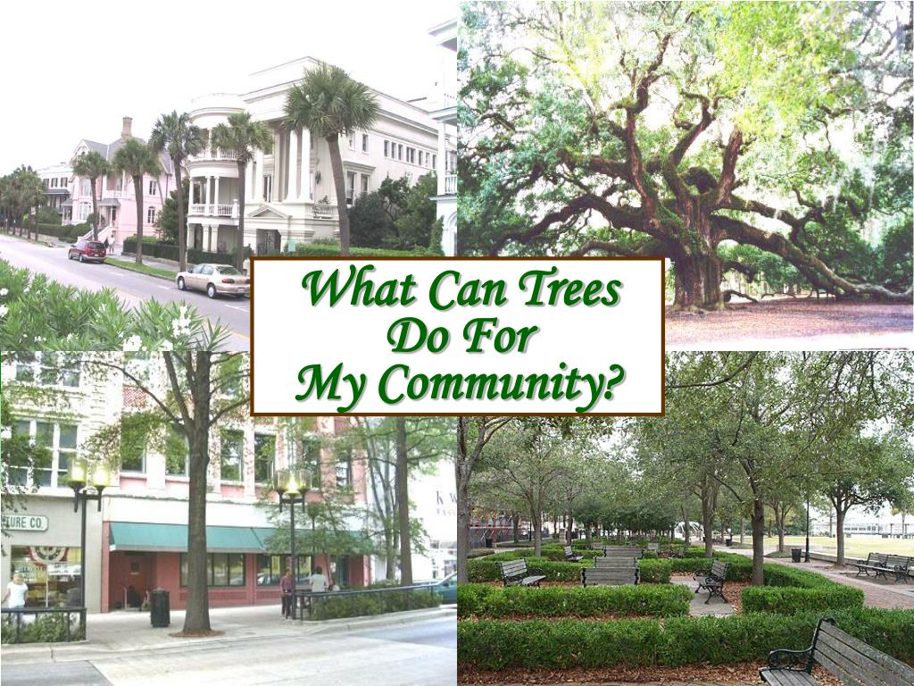 What Can Trees Do For