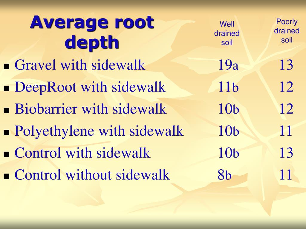 Average root depth