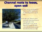 channel roots to loose open soil
