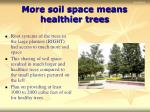 more soil space means healthier trees