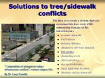solutions to tree sidewalk conflicts25