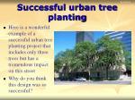successful urban tree planting