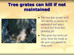 tree grates can kill if not maintained