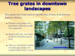tree grates in downtown landscapes
