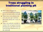 trees struggling in traditional planting pit