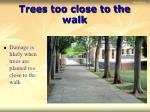 trees too close to the walk