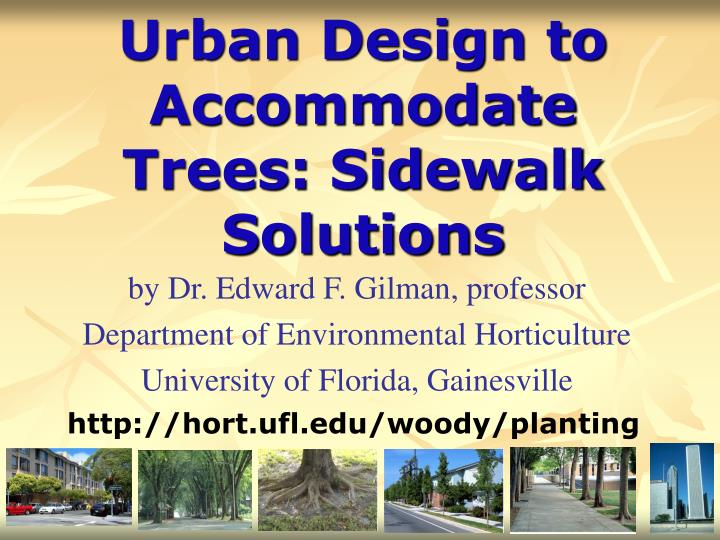 Urban design to accommodate trees sidewalk solutions