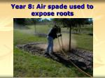 year 8 air spade used to expose roots