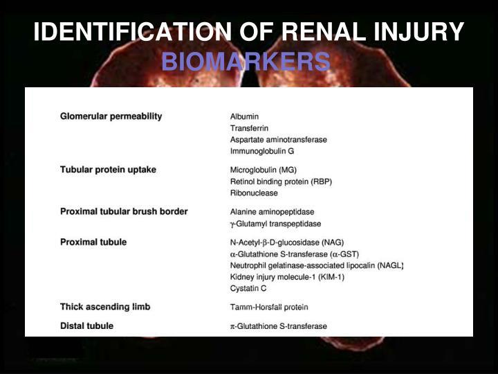 IDENTIFICATION OF RENAL INJURY