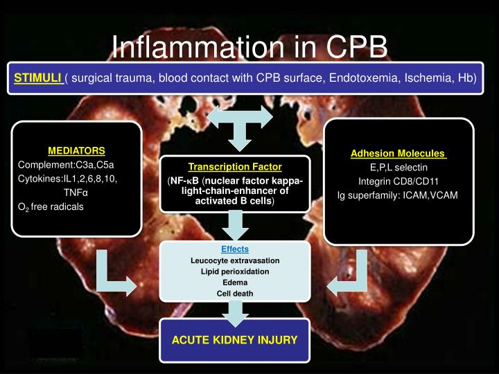 Inflammation in CPB