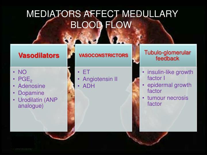 MEDIATORS AFFECT MEDULLARY BLOOD FLOW