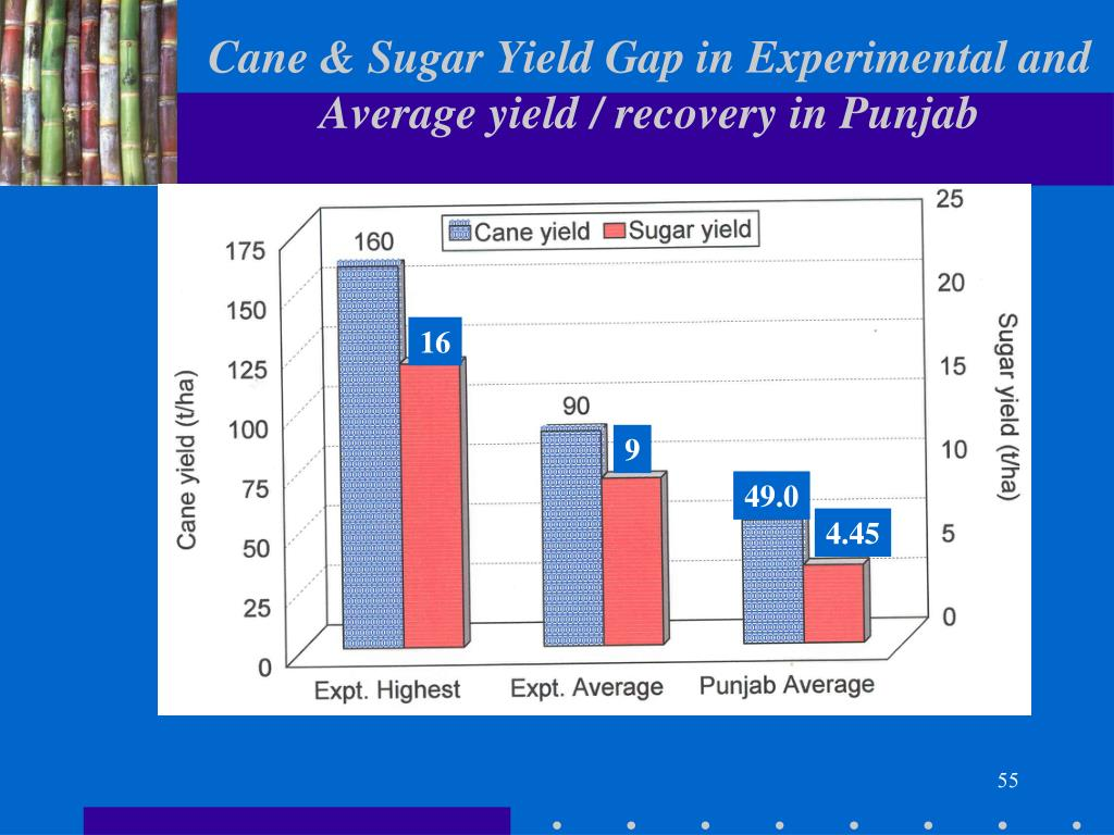 Cane & Sugar Yield Gap in Experimental and Average yield / recovery in Punjab