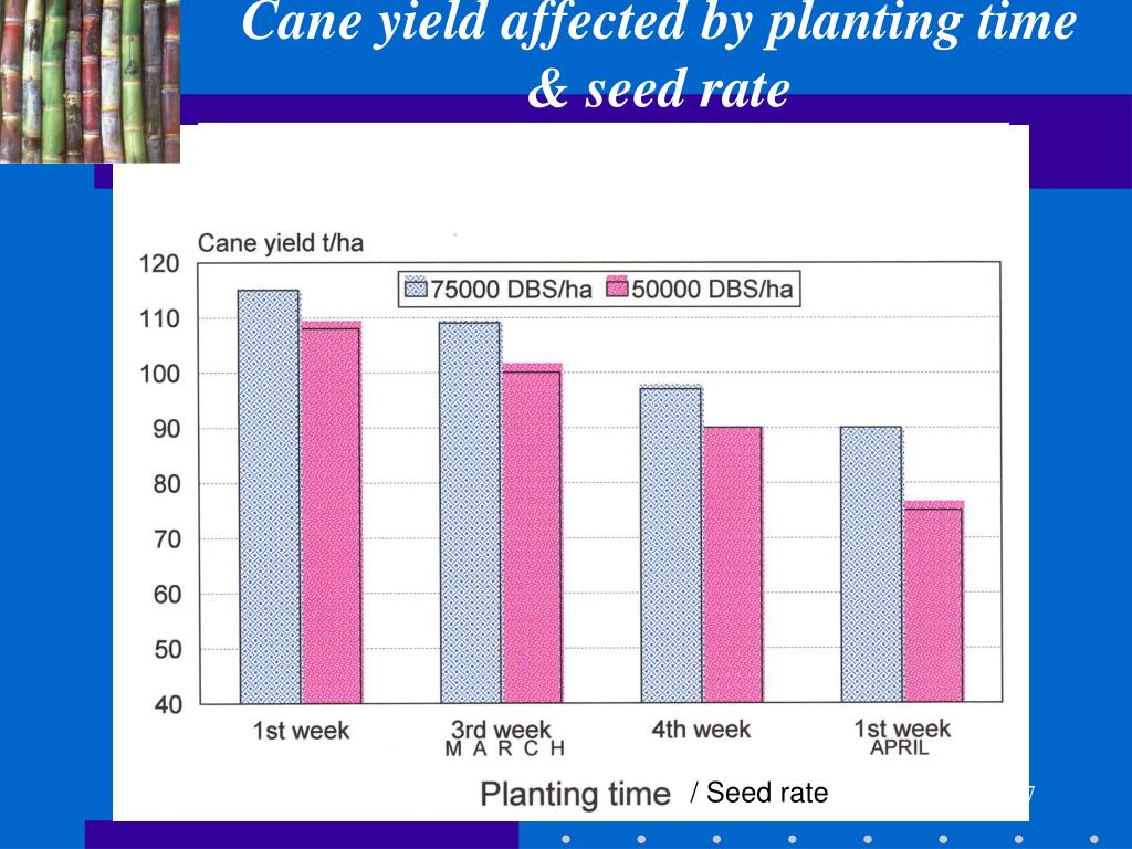 Cane yield affected by planting time