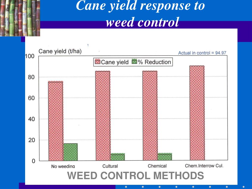 Cane yield response to