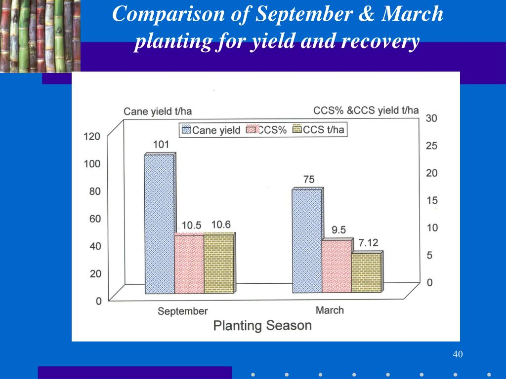 Comparison of September & March planting for yield and recovery