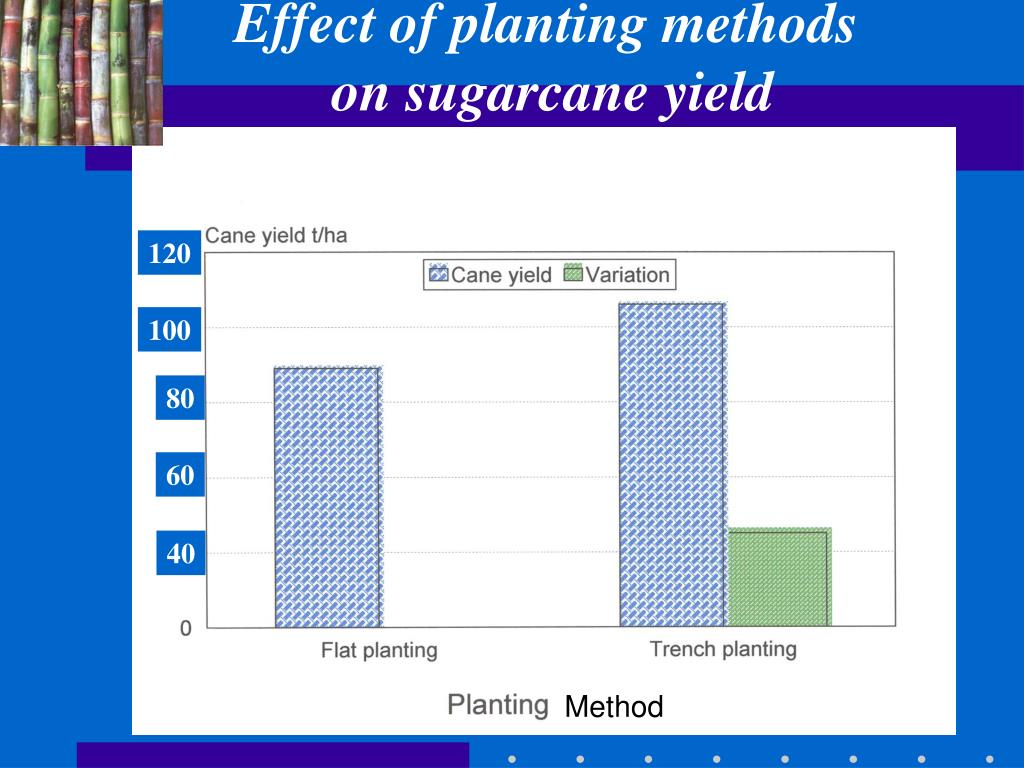 Effect of planting methods