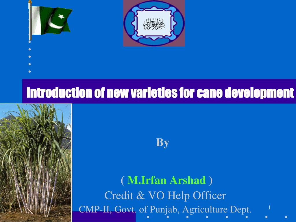 Introduction of new varieties for cane development