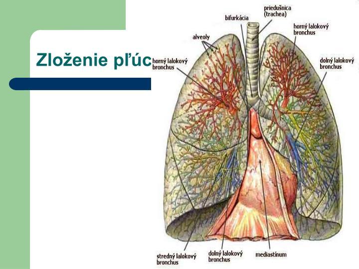 Zloženie pľúc