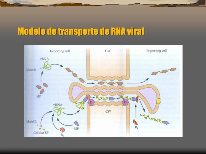 Modelo de transporte de RNA viral