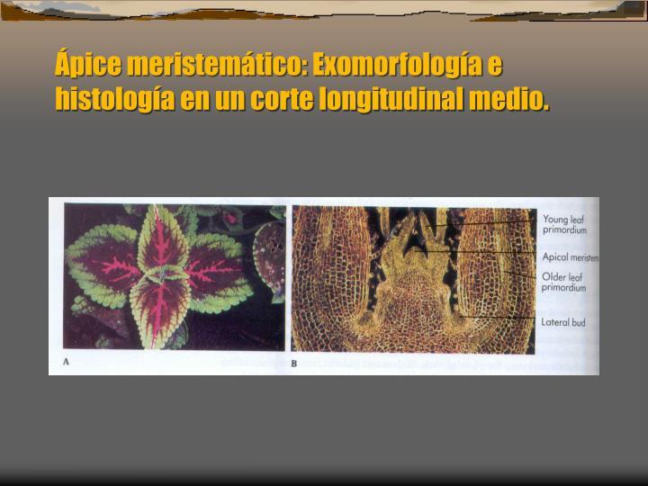 pice meristemtico: Exomorfologa e histologa en un corte longitudinal medio.
