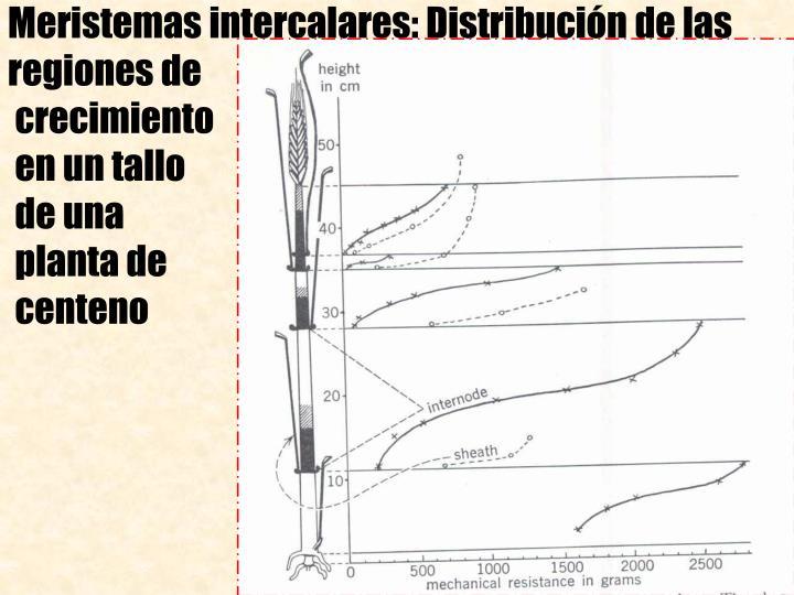 Meristemas intercalares: Distribucin de las regiones de