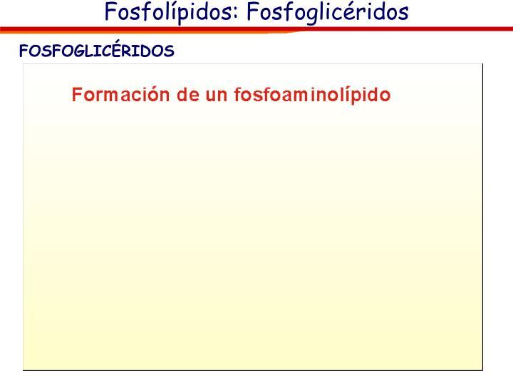Fosfolípidos: Fosfoglicéridos