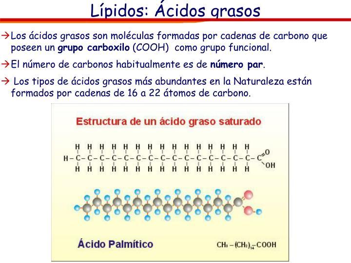Lípidos: Ácidos grasos