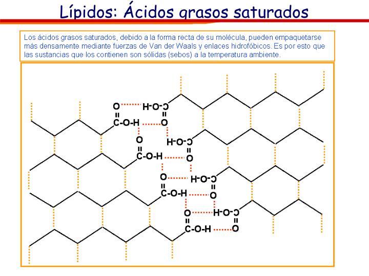 Lípidos: Ácidos grasos saturados