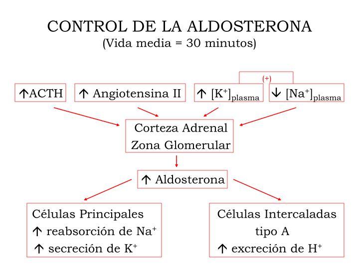 CONTROL DE LA ALDOSTERONA